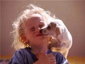 恐怖!被狗舔也能传染狂犬病?丰都养宠物还是要多一份小心!