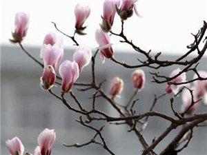 又是一年�p花季!�州市�^各公�@�V�龌ㄕ拱才�r�g公布