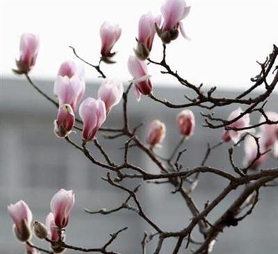 又是一年赏花季!郑州市区各公园广场花展?#25165;?#26102;间公布