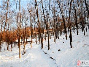 乡愁:那一片洁白的杨槐树林里还飘着杨槐花甜甜的味道