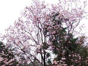 3月8日�⒂��淼谑�二�煤瞪�文化�