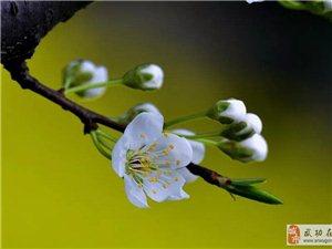 《春天 花���_》