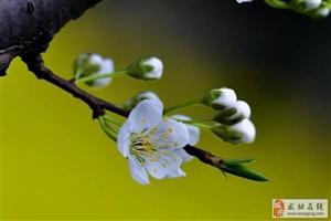 《春天 花会开》