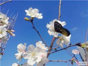 【�①�】一朵折春�L,花�獯阂�猓ㄊ�C)