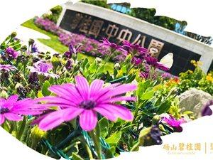 砀山碧桂园中央公园