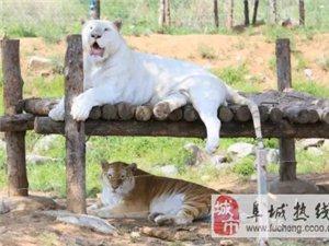 [阜城康辉】济南野生动物园一日游