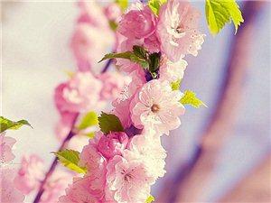最近非常想出去赏花,但是好像这个目标很难达成哈!