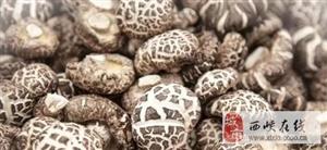 世界香菇看中国 中国香菇看电脑下注游戏 电脑下注游戏名片之:袋料香菇