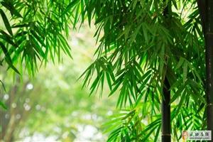 【绿野书院】诗词| 十首闲适诗词:若无闲事挂心头,便是人间好时节