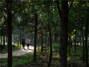 合阳计划今年植树造林4.5万亩