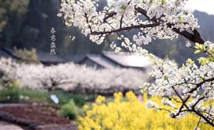 重庆周边赏花 大多数人都去错了地方
