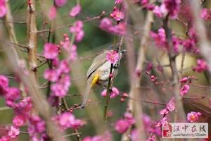几场春雨过后,沉寂了一个冬天的汉中大地开始逐渐苏醒