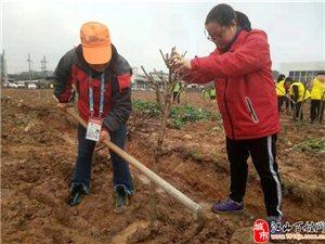 江山滴水公益积极参加全市春季义务植树活动