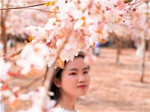樱花三月下塔洋