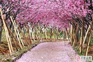 【绿野书院】诗歌六首   咏花――文/张兆辉