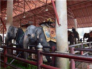 �c大象�H密接�|