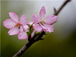 春花 随拍 、、、