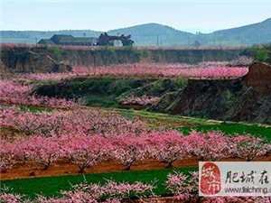 第18届太阳城桃花节3月25日拉开帷幕