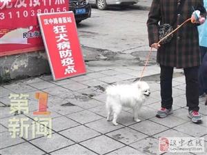 汉中汉台:所有犬只免费接种狂犬疫苗
