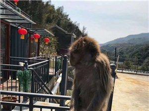饭店里居然来了只野猴!!!