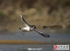 阳春三月的陕西威尼斯人网上娱乐平台洋县,春暖花开