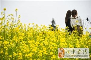 在摄影师的镜头下,威尼斯人网上娱乐平台油菜花美美的