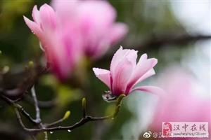"""""""植物熊猫""""旱莲花开正盛,错过等一年!快去勉县赏花祈福吧"""