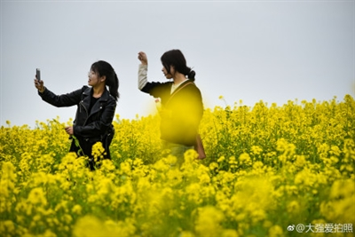 汉中油菜花中的百态身姿,真迷人