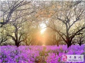 3月30-31日江苏宿迁相约梨兰会(明天准时出发还有名额)