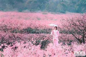 """【AA约伴】:3月23日""""美丽约会""""桃花林(明天准时出发)"""