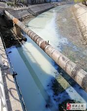 """我去!滨州这个地方竟出现一条""""牛奶河""""……"""