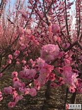 【绿野书院】静待花开,敬听花谢
