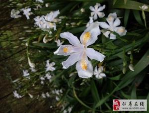 春暖花开,踏青的最佳季节