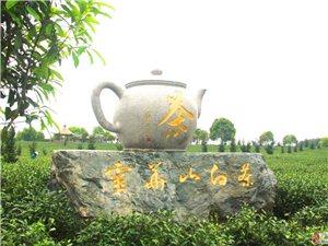 �盟商家――�`�A山白茶�废砜����惠信息