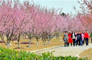 定了!3月23日,同心花海第二届樱花文化节,与你美丽相约!