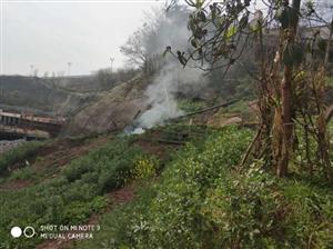 广安区综合行政执法局 及时制止焚烧垃圾 消除隐患