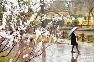 沐浴在春雨中!