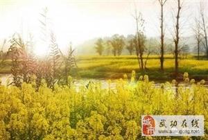 【绿野书院】春日哀曲――文|冯胜利