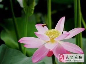 【绿野书院】诗歌 | 咏桃花(外三首)―文/张兆辉