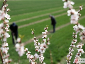 春分到  农事忙
