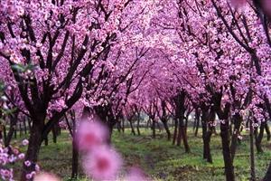 春之序曲-1
