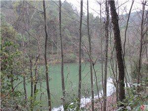 寂寞的青龙山森林公园