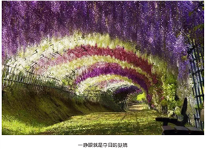 惊艳大桐城!2019桐城百万紫藤花海风铃艺术节,3月29日启幕!