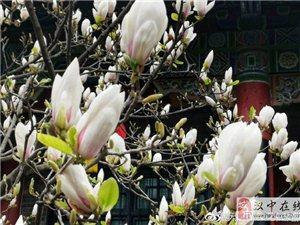 汉中博物馆的春天