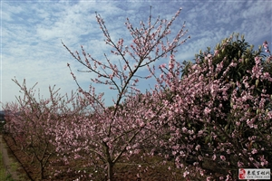 在那桃花盛开的地方――酉水两岸  [桃花篇]