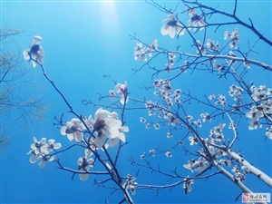 碧水蓝天―风景这边独好
