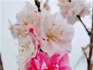 福广山赏春