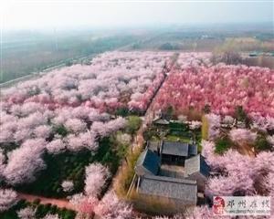 许昌鄢陵唐韵樱花园,曹魏古城一日游(3月31日)