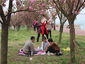 彭山:岷江河堤�鸦��漫
