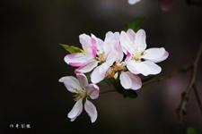 春分是什么意思春分有什么含义